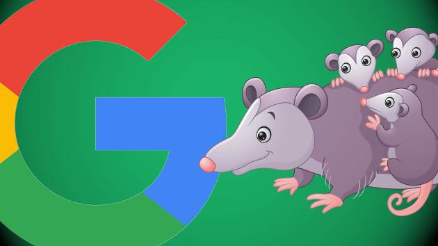 algoritmo Google Zarigüeya