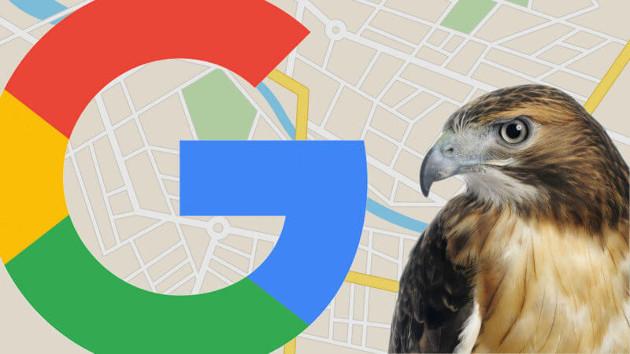 algoritmo Google 'Hawk'